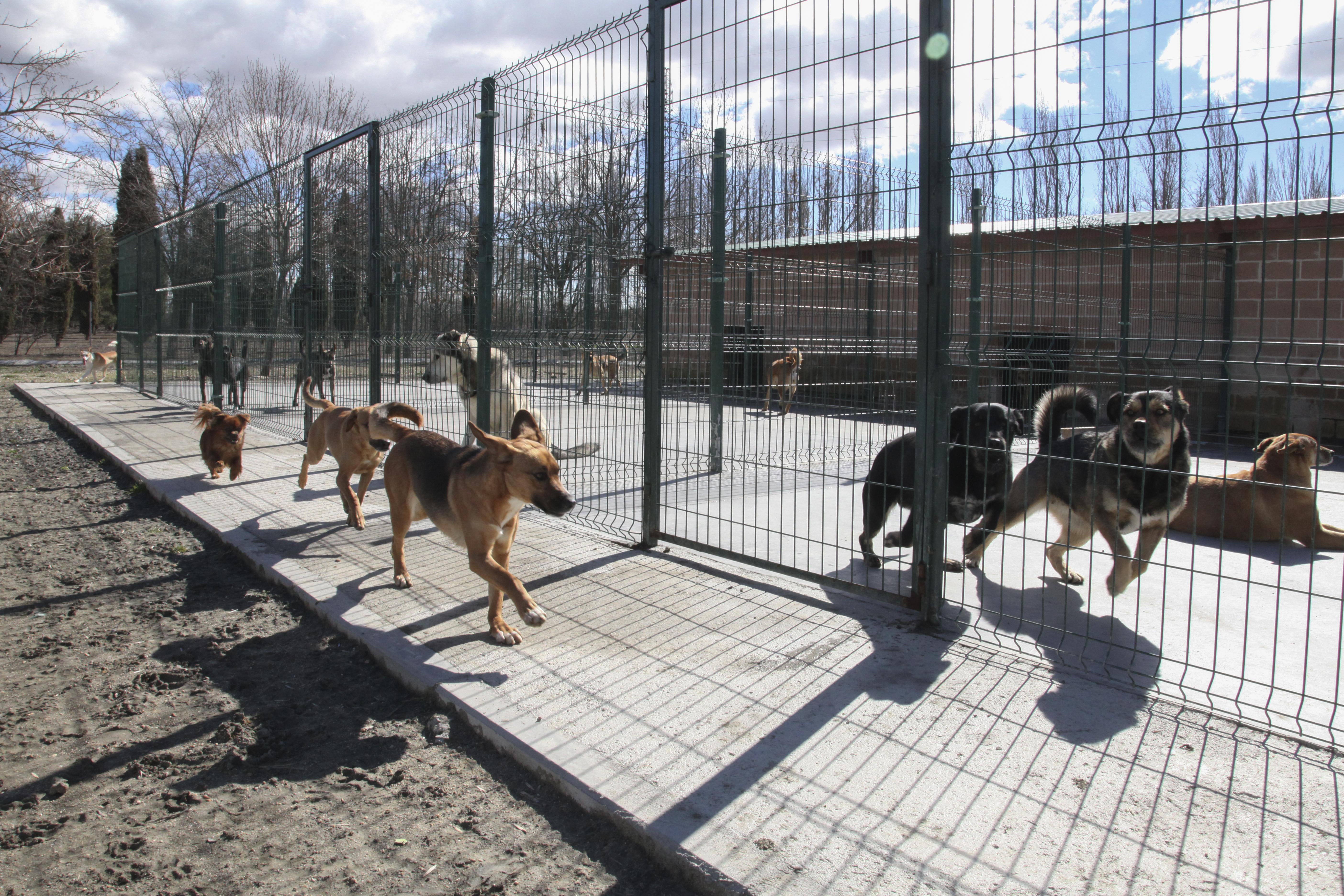 ÉXITO DE PARTICIPACIÓN EN LA JORNADA DE PUERTAS ABIERTAS DEL CENTRO DE PROTECCIÓN ANIMAL